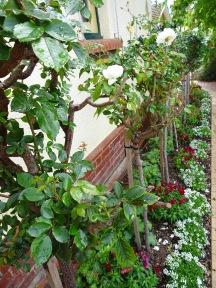 Kitchen Wall Rose Bed - 21 September 2016