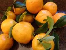 Mandarin Marmalade - Blog 4
