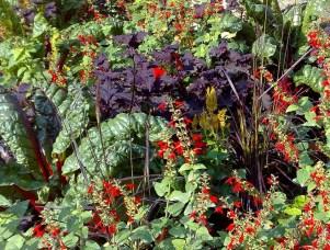 swiss-chard-luxemberg-gardens-2009-2-r